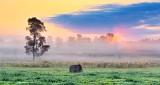 Tree & Bale In Foggy Sunrise P1250445-51