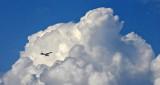 High In The Sky DSCN15173