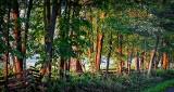 Roadside Trees At Sunrise P1250989