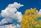 Late Summer Fall Foliage DSCN15137