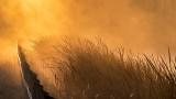 Roadside Grass In Sunrise Mist P1260256