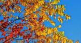 Autumn Leaves DSCN16035
