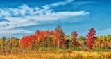 Autumnscape DSCN15998