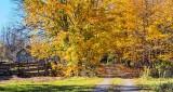 Autumn Laneway DSCN16542-4