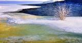 Frosted Bush In Ice DSCN18724