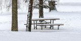 Pines & Picnic Table In Snow DSCN18743-5