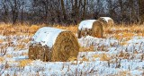 Snow-capped Bales DSCN19055