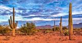 Arizona Desert Scene 75010
