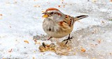 Sparrow With A Seed DSCN19317