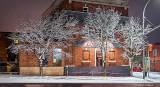 Snowy Trees P1290879-83