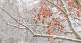 Winter Leaves DSCN19640-2