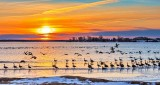 Loosey Goosey Sunrise DSCN19935-7