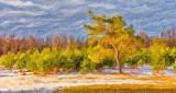 Spring Landscape DSCN21001 'Art'