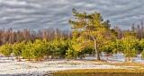 Spring Landscape DSCN21001