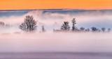 Trees In Ground Fog At Sunrise P1300544-6