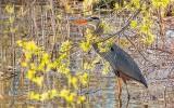 Hiding Heron DSCN22221