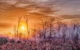 Sunrise Through Ground Fog P1310105-11