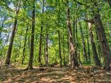 Mud Lake Woods DSCN23990-2