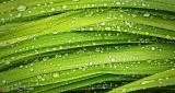 Wet Leaves DSCN24274