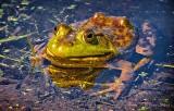 Bullfrog DSCN24804