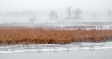 Foggy Swale P1040522-4