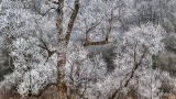 Frosty Tree P1050048-50