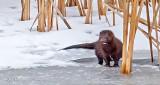 Wet Mink On Ice P1050228.9