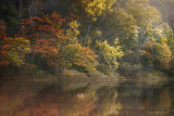 River's Paint Brush