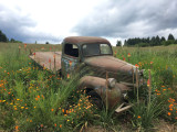 Dodge 1941 and flowers