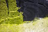 Colors in the tidal zone