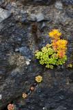 Angora Peak Flora and Textures