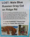 Lost cat 002.JPG