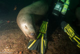 The Problem With Shooting Sea Lions (1)