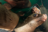 The Problem With Shooting Sea Lions (4)