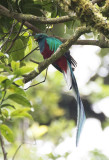 Costa Rica: National Parks and Tropical Forests