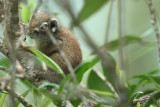 Squirrel and Treeshrew Images