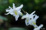 Orchids species