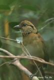 449 species of Wild Bird of  Sabah, wild bird of Borneo