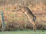 Jumping Buck - 5 Shot Series