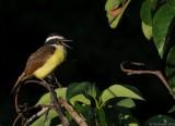 Birds of Oaxaca