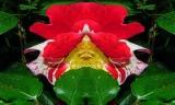 Saturday Morning Roses 6