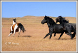 Stallions battle for a mare.