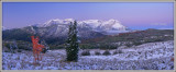 Lone Maple Panorama