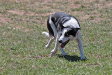 Soldier Hollow Classic: Sheepdog Championship