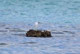 Shorebirds and Wading Birds