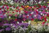 A Frame Full of Spring
