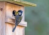 Nest Buidling