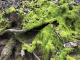 Nice green moss