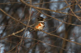December Kingfisher