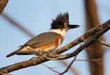 December KingfisherII